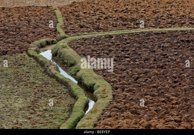 Reisfeld im zentralen Hochland, Madagaskar, Afrika Stockbild