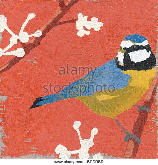 Blaumeise hocken auf Blüte Zweig Stockbild