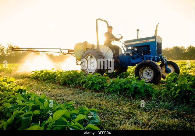Aufsprühen Seetang Kartoffelernte Bio - zertifizierte Bio-Produzent Stockbild