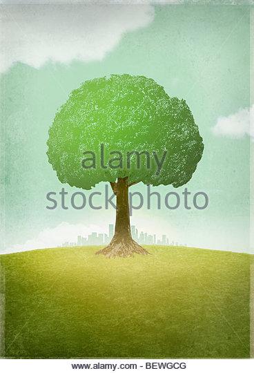 Einsamer Baum weg von Stadt Stockbild