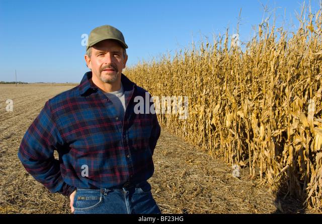 Landwirtschaft - ein Bauer stellt auf seinem Gebiet teilweise geernteten reife Getreide Mais / Iowa, USA. Stockbild