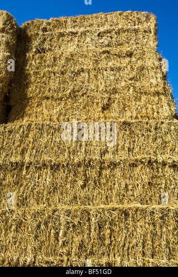 Landwirtschaft - Ballen Reis Stroh dient als Zutat in Tierfutter / in der Nähe von Williams, Kalifornien, USA. Stockbild