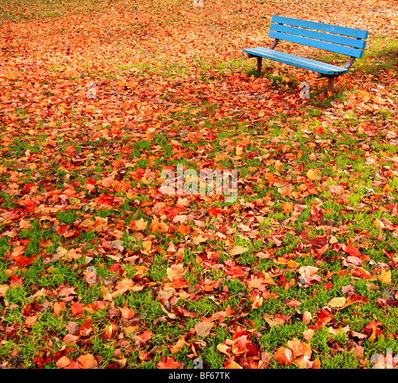 Eine einsame, blaue Bank in einem Park, umgeben von Herbstlaub. Stockbild