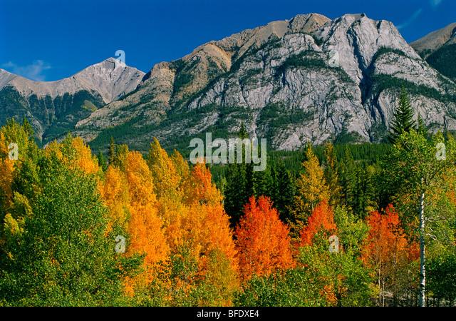 Herbst Farben in den kanadischen Rocky Mountains entlang der Autobahn David Thompson, Alberta, Kanada Stockbild