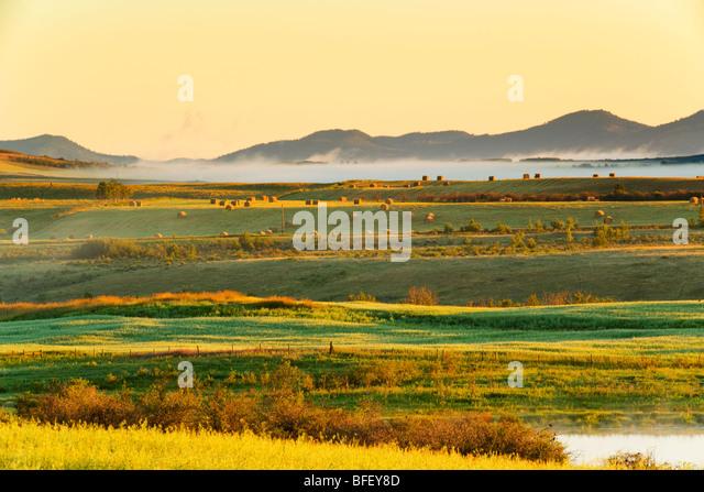 Morgennebel über Ackerland, Cochrane, Alberta, Kanada, Landwirtschaft, Heu Stockbild