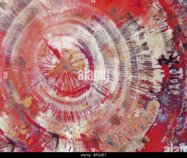 Versteinertes Holz, close-up Stockbild