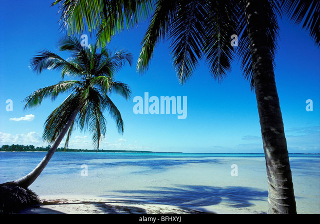 Palmen am Strand, Punta Cana, Dominikanische Republik Stockbild