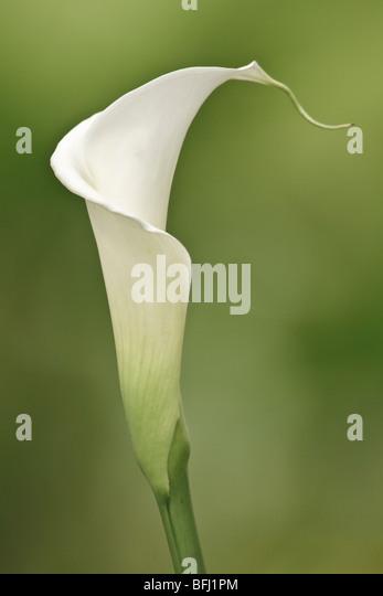 Eine Blume in Ecuador. Stockbild