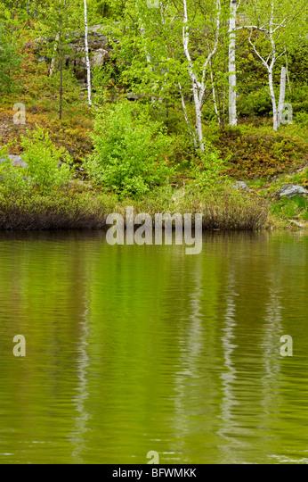 Frühling Birken spiegelt sich im See Laurentian, Greater Sudbury, Ontario, Kanada Stockbild