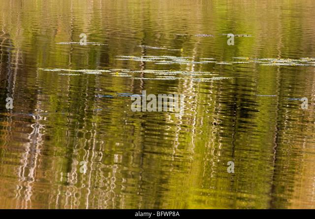 Birke Baum Reflexionen in Beaverpond Wasser, Greater Sudbury, Ontario, Kanada Stockbild