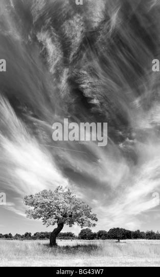 Baum und Wolken, Provence, Frankreich Stockbild