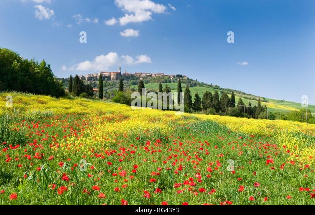Hügel der Stadt Pienza und Bereich der Mohn, Toskana, Italien Stockbild