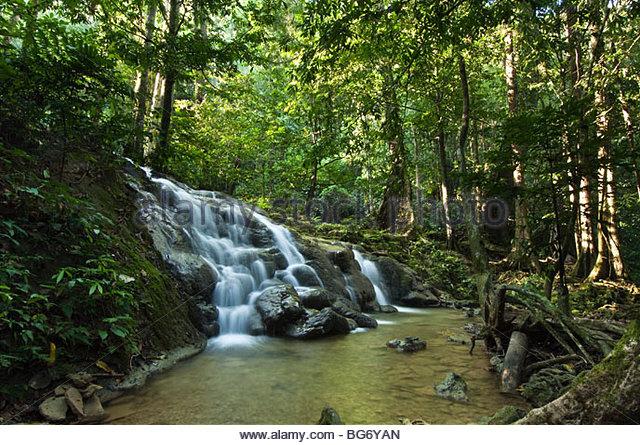 Wasserfall im Regenwald. Stockbild