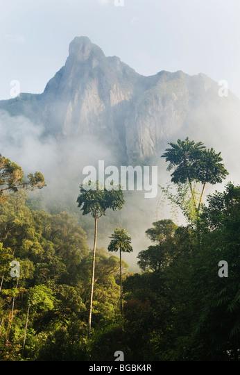 Gelehnt, Rock oder Ambatotsondrona, Lager 2, Marojejy Nationalparks, Madagaskar Stockbild