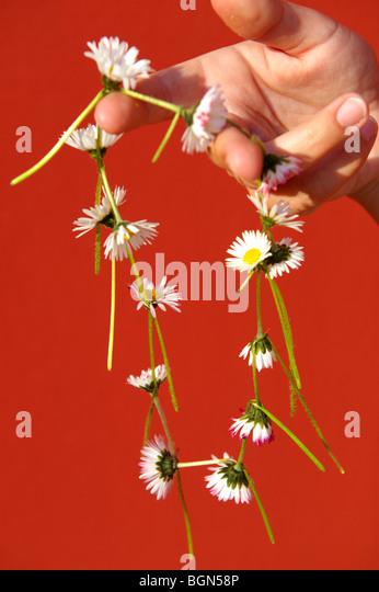 Daisy-Chain gemacht Stockbild