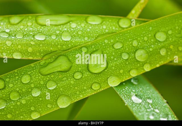 Regentropfen auf Grashalmen, Greater Sudbury, Ontario, Kanada Stockbild