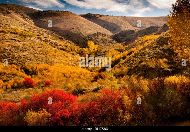 Berg im Herbst Farben, South Fork des Flusses Boise in Idaho. Stockbild