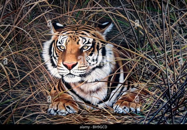 Tiger Buenos Aires San Telmo Galerie Kunst Malerei Künstler Argentinien Stadt Stockbild