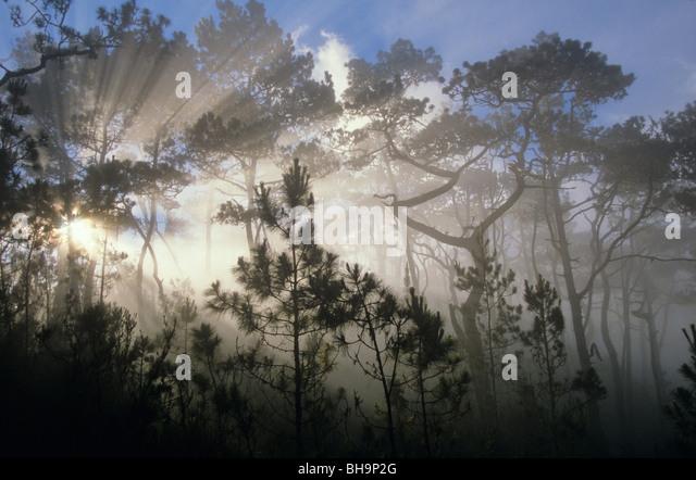 Nebelwald, hoch in den Bergen von Cordilera Central, in der Nähe von Pico Durate im Nationalpark Armando Bermúdez, Stockbild