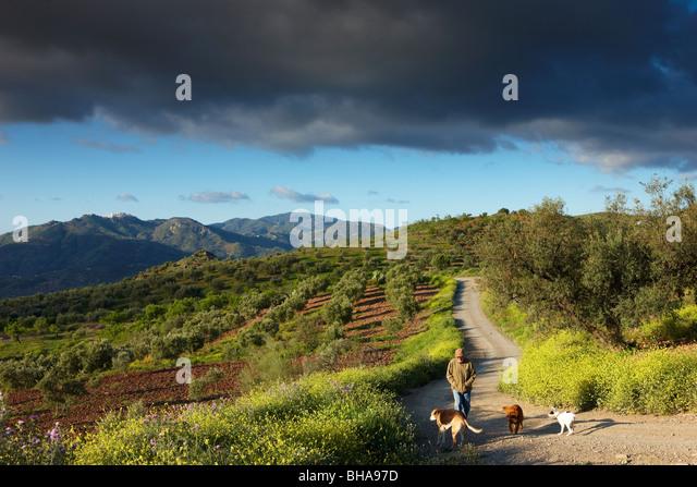 Andalusischen Workshop; Dave Waterman mit seinen Hunden nr Los Molinos, Periana, Andalusien, Spanien Stockbild