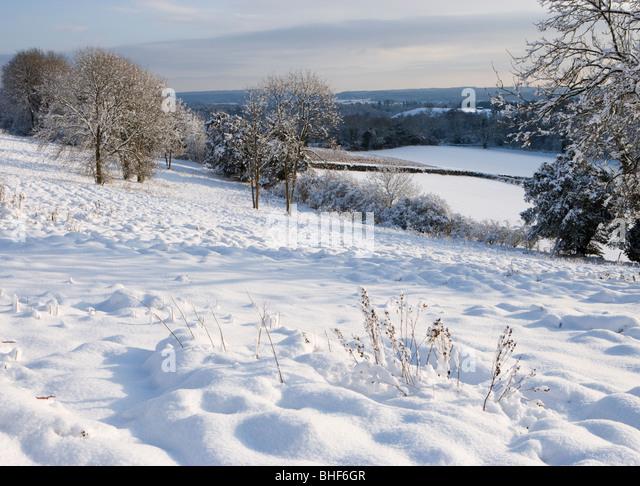 Winter in Newlands Ecke in der Nähe von Guildford, Surrey, UK. Stockbild