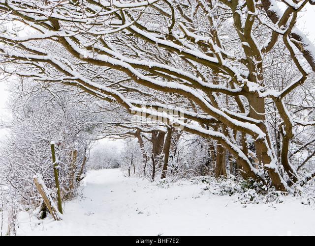 Weg unter Schnee beladene Bäume. Send, Surrey, UK. Stockbild