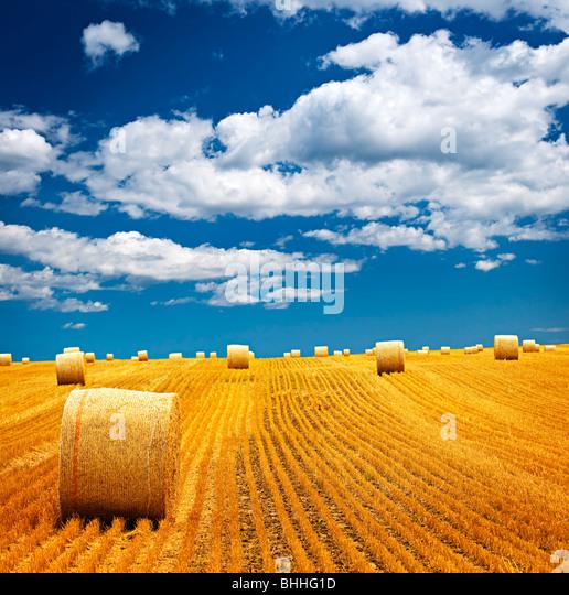 Agrarlandschaft von Heuballen auf einem goldenen Feld Stockbild