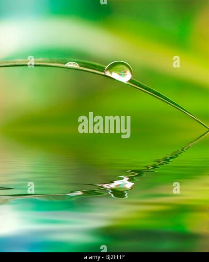 Ein Wassertropfen von einem Blatt verursacht eine Welle an der Oberfläche reflektiert eine grünen Dschungel Stockbild