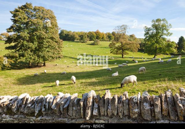 Schafe grasen die Felder neben den Cotswold-Dorf Notgrove, Gloucestershire Stockbild