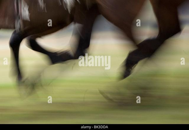 Hufe der Pferde in einem Rennen Stockbild