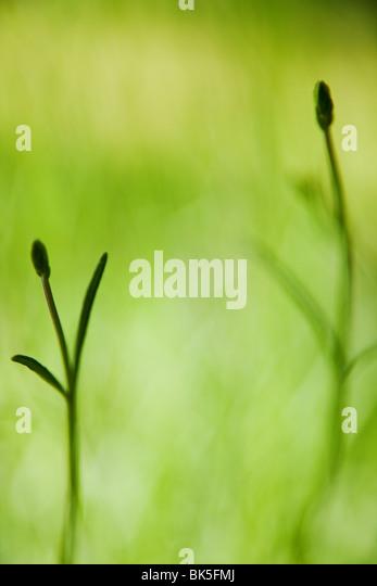 Grasgrün Hintergrund Stockbild