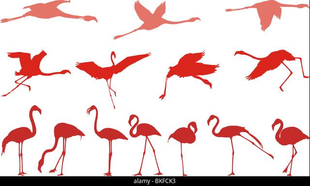 Eingereicht von Vektor-Illustrationen von Vögel, rosa flamingos Stockbild
