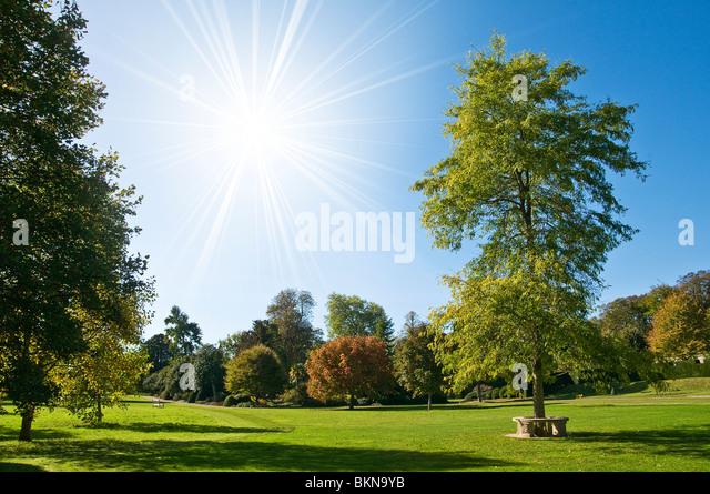 Sommerpark Stockbild