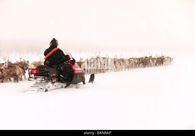 Die jährliche Sami Frühling Rentier Migration von Stubba nr Gällivare in Schweden durch ihrem angestammten Stockbild