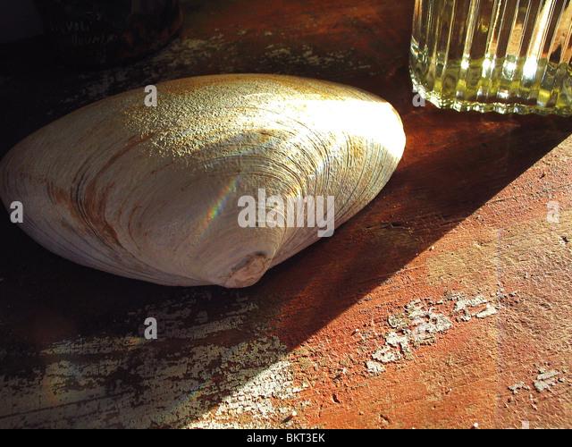 Clam-Shell auf alten lackierten Oberfläche. Stockbild