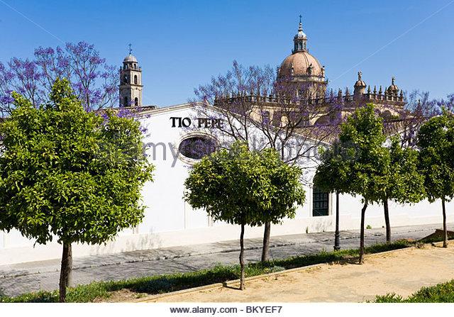 Bodegas Gonzalez Byass und die Kathedrale von Jerez De La Frontera, Andalusien, Provinz Cadiz, Spanien Stockbild