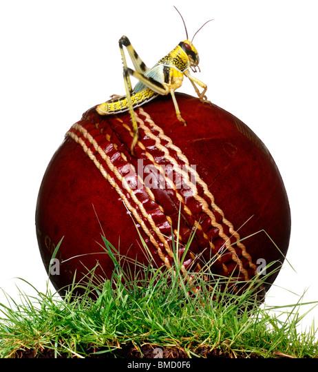 Cricketball Stockbild