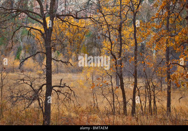 Herbstfarben von Eichen, Weiden-Eschen und Pappeln im Oak Creek Canyon Coconino National Forest, in der Nähe Stockbild