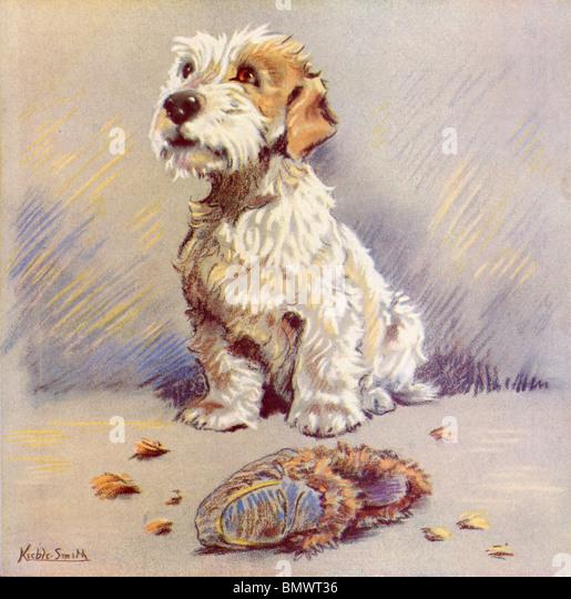 Der kleine weiße Hund mit großen braunen Augen Stockbild