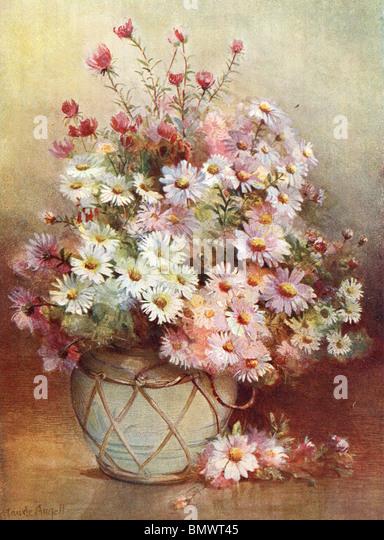 Michaeli-Gänseblümchen Stockbild