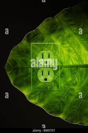 Eine grüne Pflanze Blatt mit einer Steckdose Stockbild