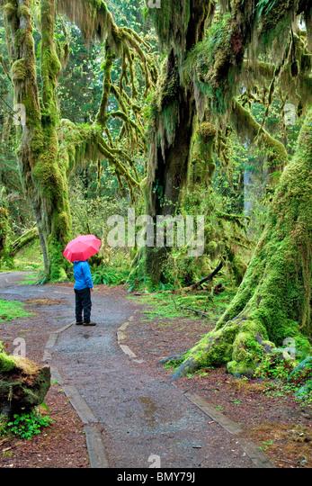 Pfad in Halle von Moosen mit Wanderer mit roten Unbrella. Hoh Regenwald. Olympic Nationalpark, Washington Stockbild