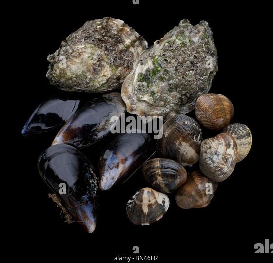 Muskeln, Muscheln und Austern Stockbild