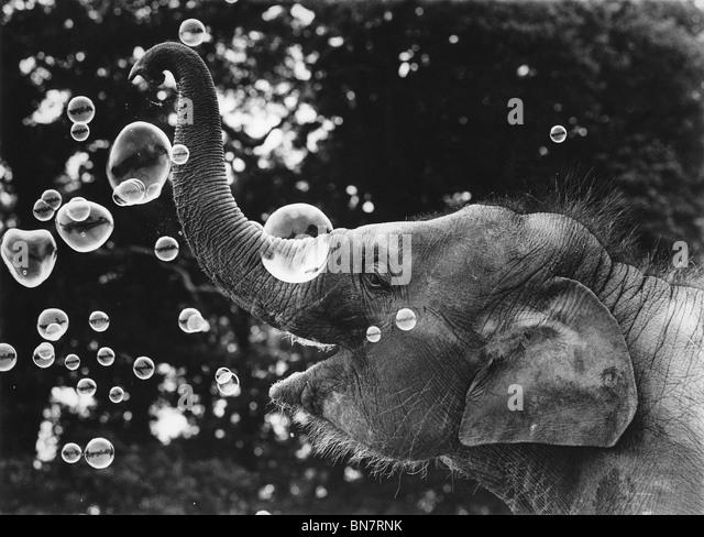 Ein Elefantenbaby bläst Seifenblasen. Stockbild