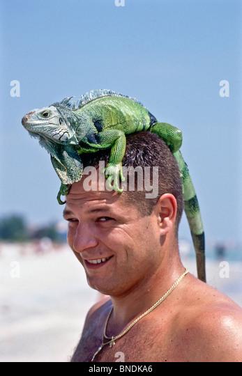 Grüner Leguan am Kopf Besitzer Reiten. Herr © Myrleen Pearson Stockbild