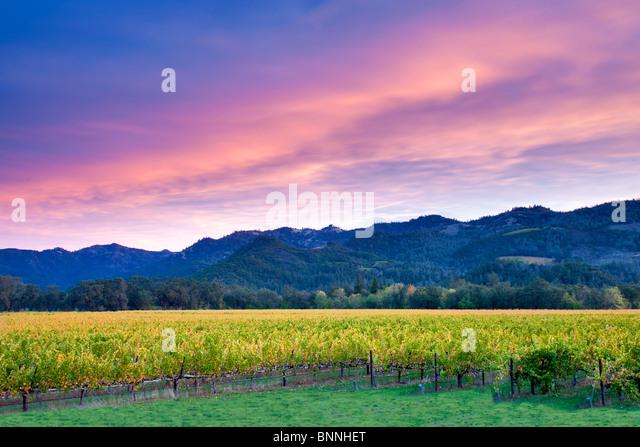 Sonnenaufgang über dem Napa Valley Weinberg mit Herbstfarben. California Stockbild