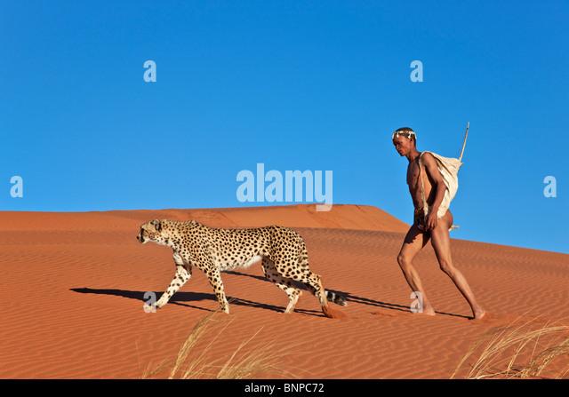 San-Jäger bewaffnet mit traditionellen Bogen und Pfeil mit Gepard Stockbild