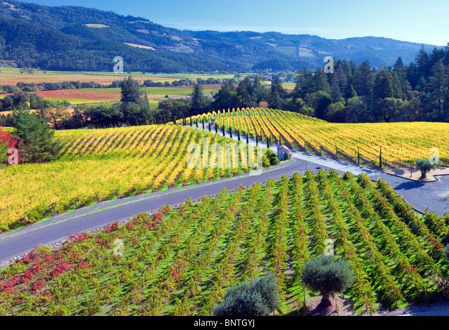 Blick auf Weinberge vor Castello di Amorosa. Napa Valley, Kalifornien. Eigentum freigegeben Stockbild