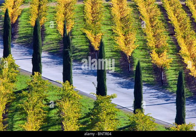 Blick auf Weinberge und Zypern gesäumten Auffahrt vor Castello di Amorosa. Napa Valley, Kalifornien. Eigentum Stockbild