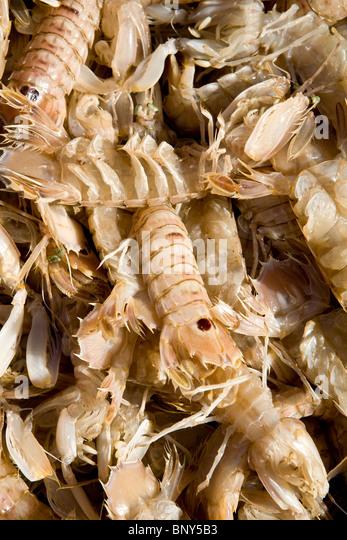 Frisch gefischt europäischen Locust Hummer (Scyllarus Arctus) Stockbild